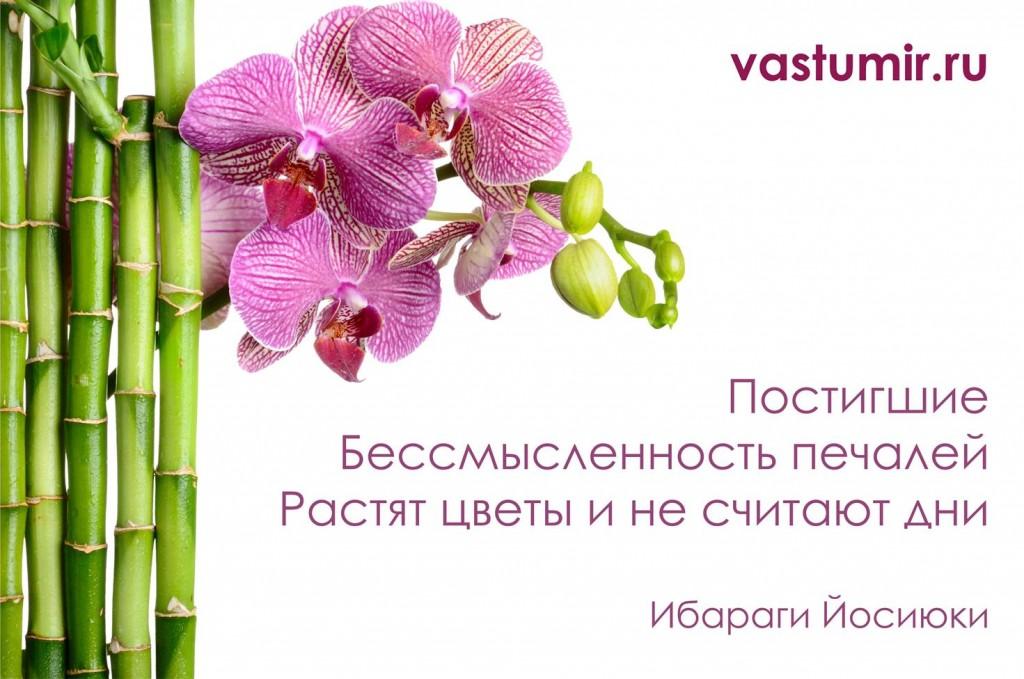 цветы_